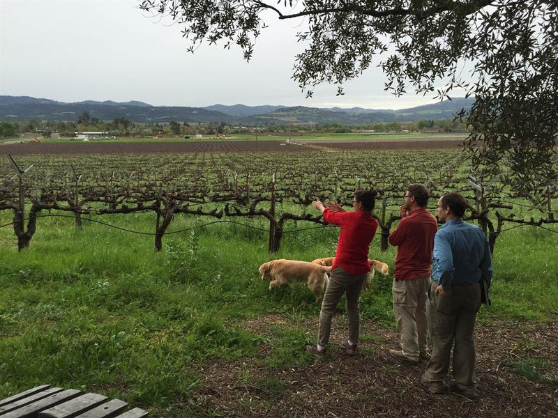 VinSense's Dr. Phillip Owens and Dr. David Ebert work with a winery owner in Napa Valley.