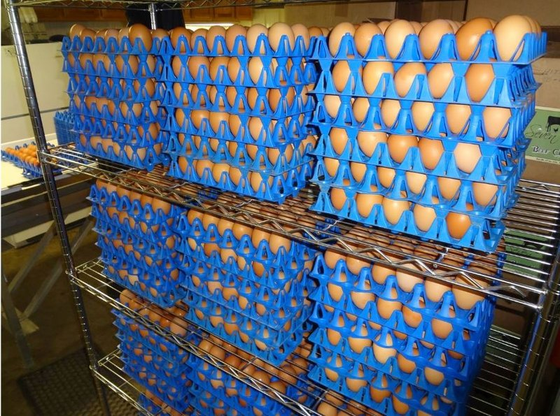 One of the region's key exports is eggs.