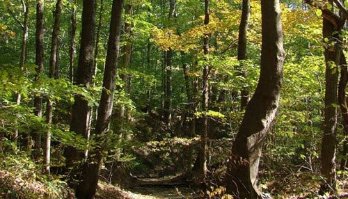 (Image provided by the Central Indiana Land Trust.)