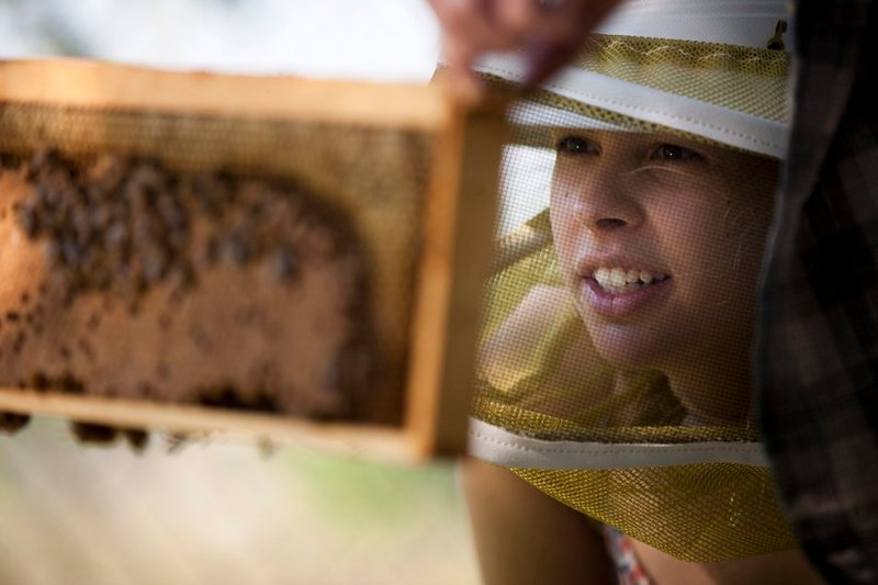 The Bee Corp. Chief Executive Officer Ellie Symes observes bees. The company's technology monitors hives' internal temperature.
