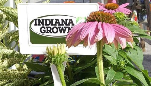 (Image courtesy of Indiana Grown)