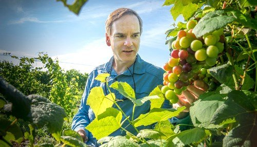 (Image of VinSense Co-Founder David Ebert Courtesy of the Purdue Research Foundation.)