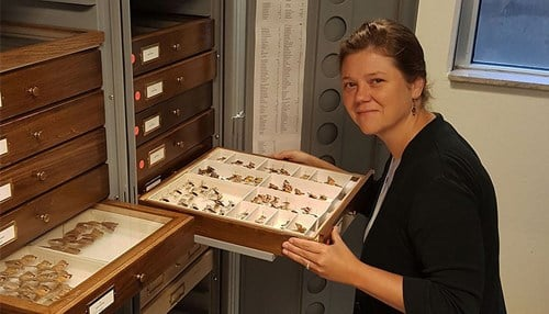 Jennifer Zaspel is the director of the Purdue Entomological Research Collection.
