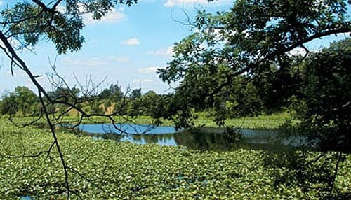 Pisgah Marsh is one of the newly-named nature preserves. (photo courtesy Department of Natural Resources)
