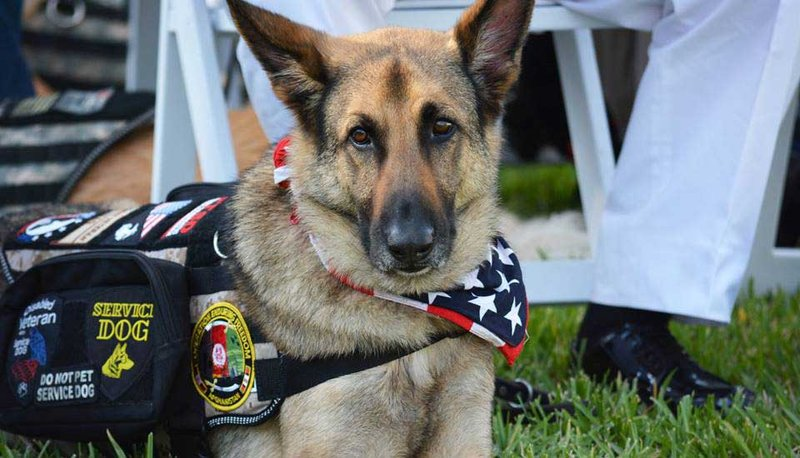 K9s For Warriors will invite veterans nationwide with PTSD to be part of the Purdue study.