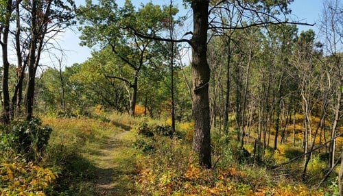 (file photo courtesy Indiana Dunes National Lakeshore Forest)