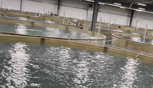 AquaBounty operates a facility in Albany, Indiana. (photo courtesy of Bell Aquaculture)