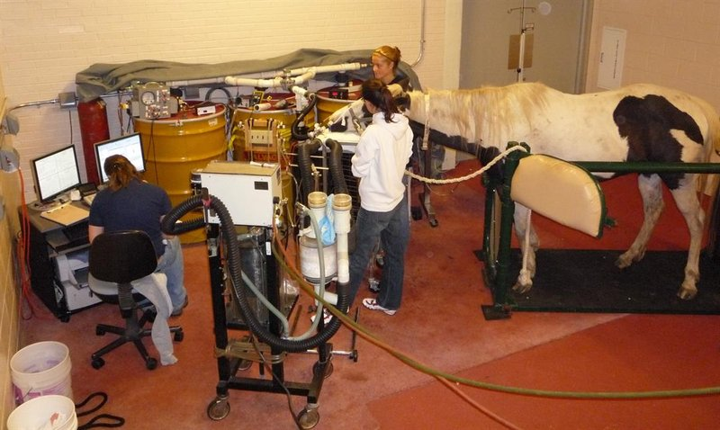 The test involves connecting the horse's airways to two different tanks; one with positive pressure and the other with negative (like a vacuum).
