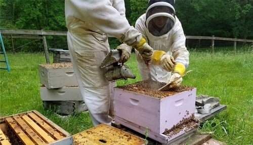 The Bee Corp  Relocating to Indy - Inside INdiana Business